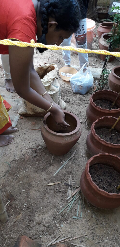 Horticulture : Sowing the seeds